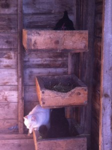 The cats get the bottom bunk!