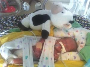 Berwick and his stuffed cow...