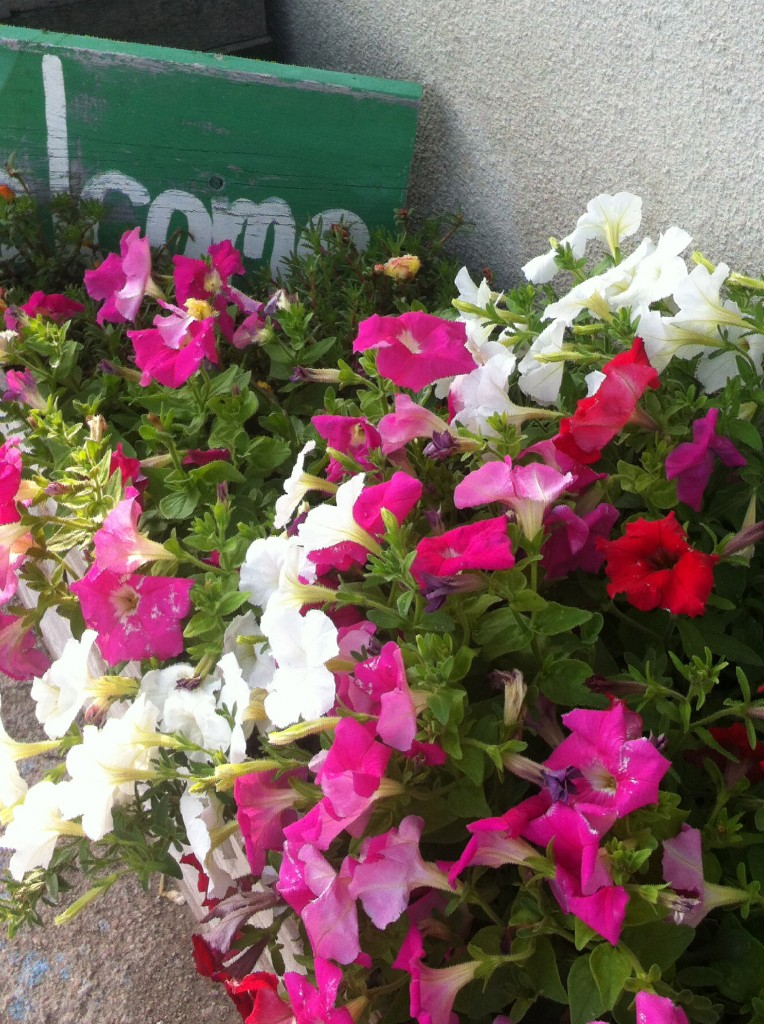 And these pink petunias are Wrexy's favorite!