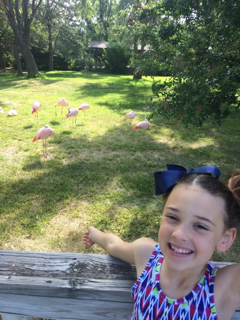 Sawyer LOVES flamingos!