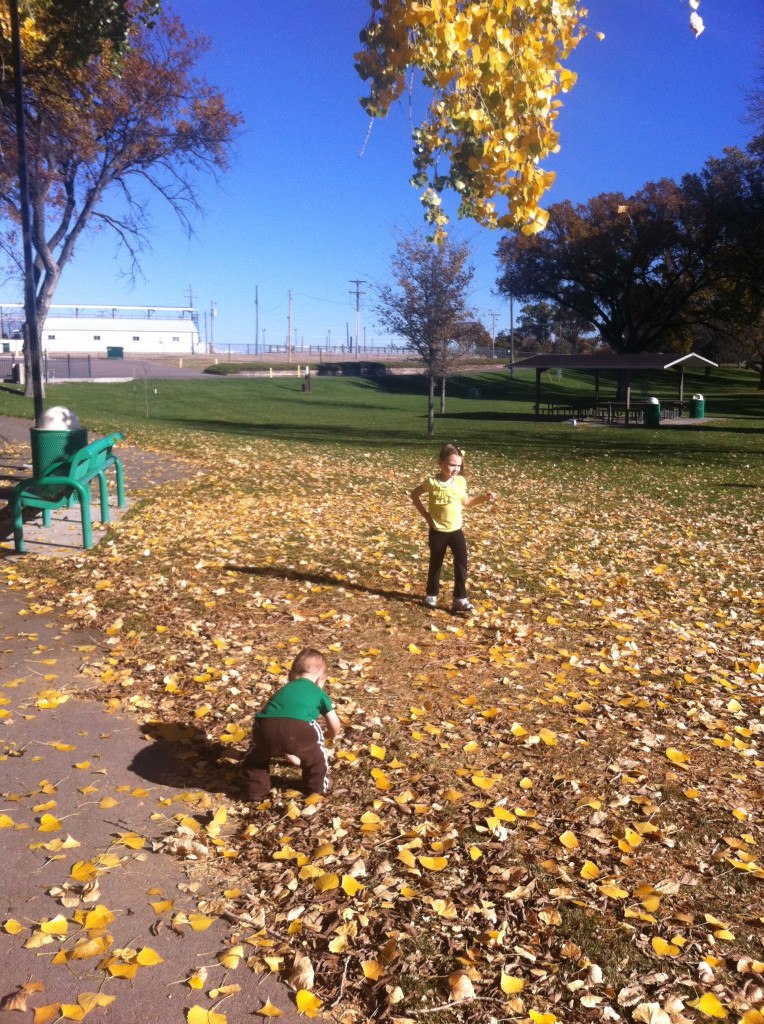 They LOVED All The Leaves! We Have A Few Trees Around The Place But Theyu0027re  All Either Cedar, Pine Or Chinese Elm; Not Too Many Leaves Falling Around  Here.